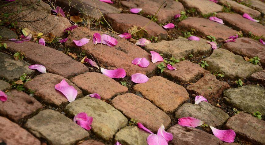 Pinkfarbene Blütenblätter auf altes Kopfsteinpflaster gestreut.