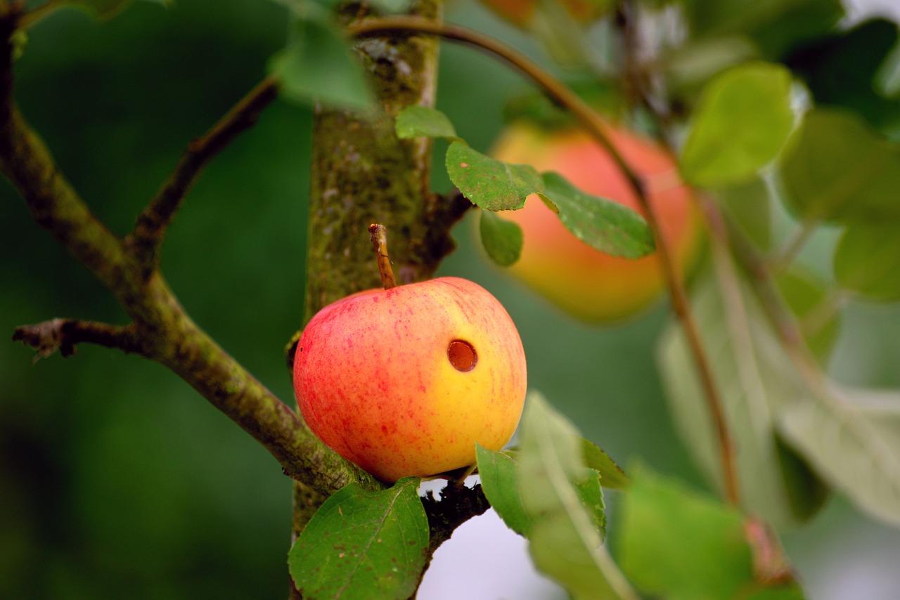 Manchmal hat der süßeste Apfel eine schlechte Stelle.