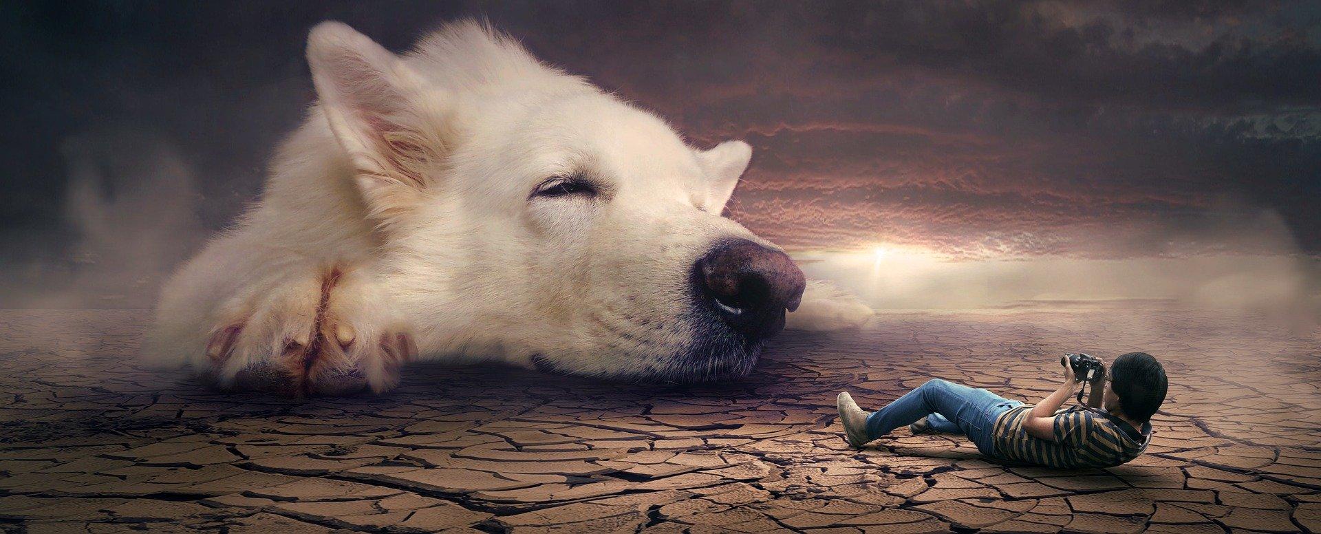 Traumdeutung: Ein Mann liegt auf dem Boden und schaut durch seine Kamera auf einen großen weißen Hund, von dem nur der Kopf zu sehen ist.